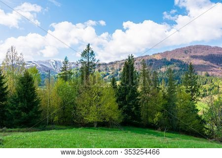 Great Landscape In Springtime. Row Of Trees On The Meadow. Mountain Ridge Beneath A Blue Sky With Fl