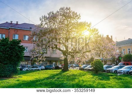 Uzhhorod, Ukraine - May 01, 2018: Paulownia Tomentosa Tree In Blossom, Located On Koriatovycha Squar