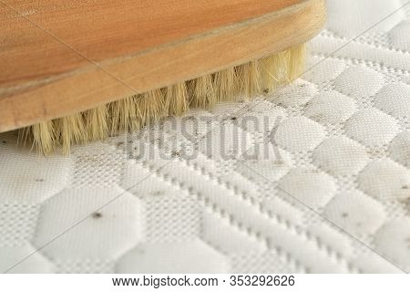 Cleaning Mould Stains From The Mattress.