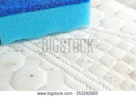 Remove Stains On The Mattress. Use Sponge To Clean Fabric Of Fungus Or Mud.