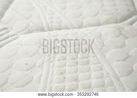 Mold On A Mattress. Stains On A White Fabric.