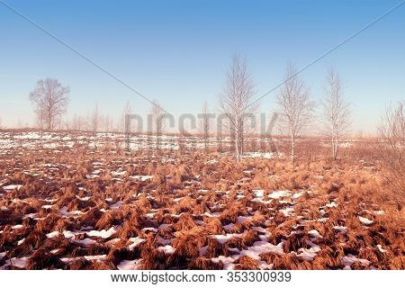 Marsh Hummocks. Landscape With Fog At Morning In A Swamp. Russian Nature.