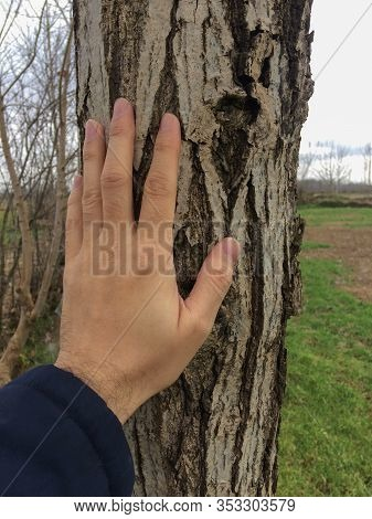 Hand Touching Tree Trunk. Keeping Touch Nature. Human Hand Touching The Nature. Loving Nature.
