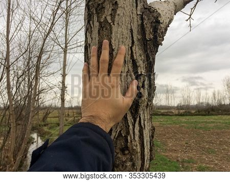 Loving Nature. Hand Touching Tree Trunk. Keeping Touch Nature. Human Hand Touching The Nature.