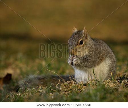 Sunset Squirrel