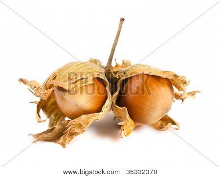 Unseasoned Filbert Nuts