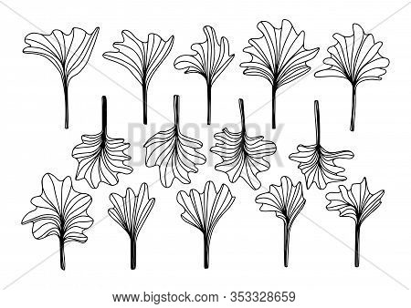 Gingko Or Ginkgo Biloba Leaf. Set Floral Leaves Flowers In Doodle Style Isolated On White Background