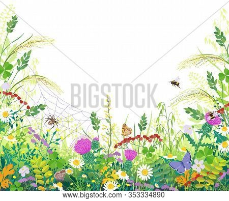 Horizontal Border With Summer Meadow Plants. Green Grass, Colorful Flowers, Butterfly, Bumblebee, Sp