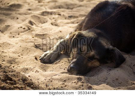 Homeless Dog Lying On Sand
