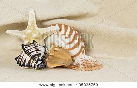 Sea Shell Still Life