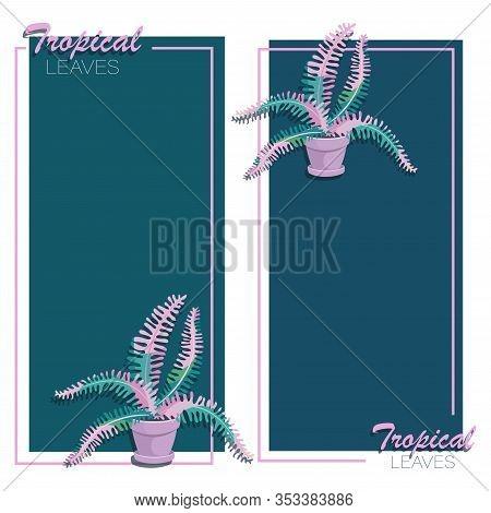 Fern Backgrounds. Set. Fern Flower Leaves. Vector Frame, Poster With Houseplant. Big Fern Leaves In