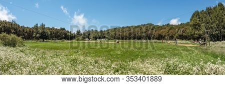 Super Wide Panorama Of Picnic Barbecua Area In The Center Of The Unique Relict Forest Of National Pa