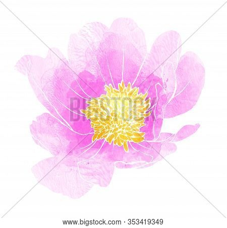 Beautiful Peony Watercolour, Great Design For Any Purposes. Spring Blossom. Delicate Hand Drawn Illu
