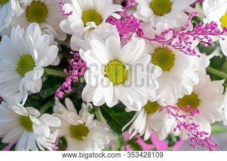 Greeting Card From Tender Spring White Flowers Close-up.