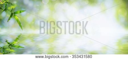 Bamboo Leaves That Have Reflections In The Water Along With Bokeh. Green Leaf On Blurred Greenery Ba
