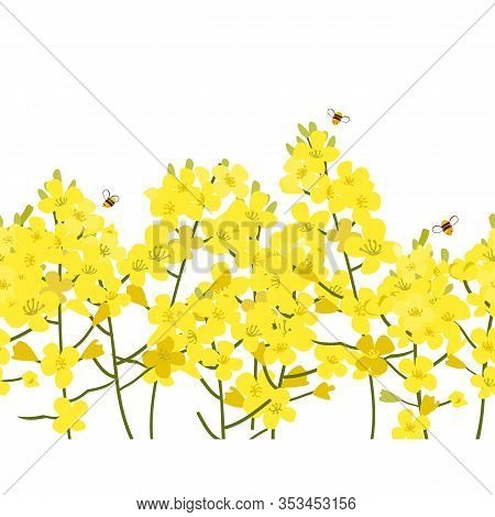 Seamless Rape Seed Border, Vector Flower Background. Rapeseed Or Canola Texture For Print, Spring Su