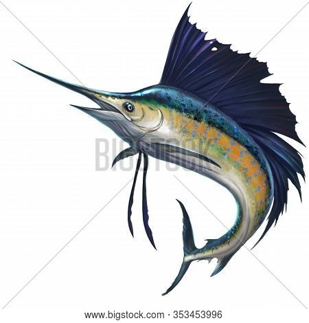 Sailfish On White. Marlin Fish Sailfish Isolate Realistic Illustration. Fish Sword In A Jumping Fish