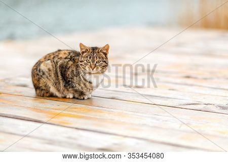 A Brown Tabby Cat Sits On A White Wooden Porch. Copy Space. Concept Of Homeless Animals And Shelter