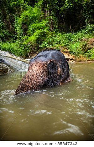 Elephant sits in the middle of the waterfall, river