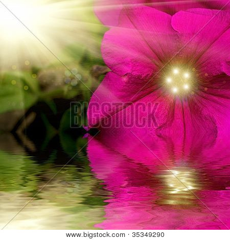 Petunia Flower Design.with Copy-space Reflacted In Water