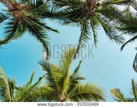 Palm Trees Against The Sky, Tropical Vacation.