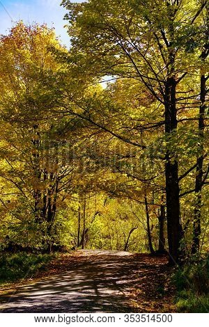 Autumn Leaves On Trees In A Forest Near Arrowtown, New Zealand