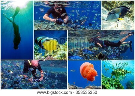 Collage - Set Of  Snorkeling In The Tropical Water Of Red Sea Egypt