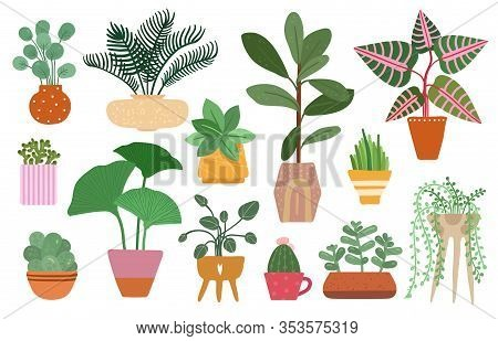 Home Plants. Isolated Plant In Pot, Planting Ficus, Yucca And Fern. Tropical Houseplant And Succulen