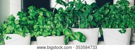 Different Kind Of Fresh Green Herbs Growing In The Pots On The Kitchen Window, Such As Basil, Mint,