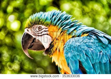Head Of A Colorful Parrot Outdoors Against A Green Background