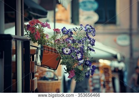Flower decoration with Monterosso street view in Cinque Terre in Italy