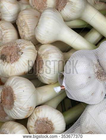 White Garlic Clove For Sale At Organic Market Of The Farm
