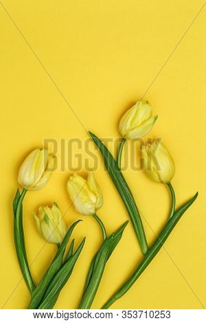 Spring Flower Of Tulip On Yellow Backdrop.  Natural Flowery Background With Copy Space. Bright Color