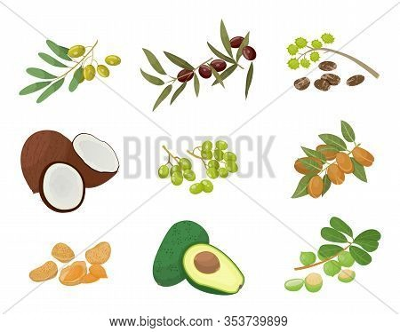 Hair Oils, Plants And Nuts, Oily Seeds, Icons Vector. Skin Care And Hairs Health, Organic Cosmetics,