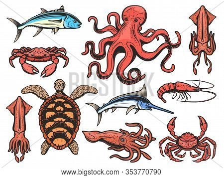 Fishes And Marine Animals Icons, Underwater World And Fishing. Vector Seafood Squid, Shrimp And Praw