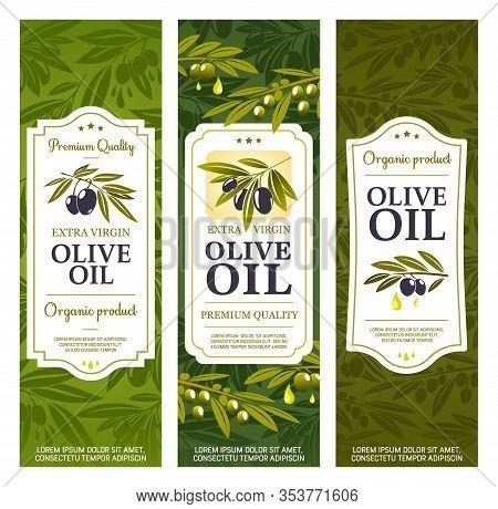 Olive Oil Bottle Package Labels, Organic Extra Virgin Olives. Vector Spanish, Greek And Italian Prem