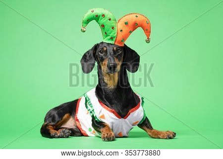 Funny Of A Happy  Dog Wearing In The Suit And Cap Of The Jester On A Green Background. April Fools D