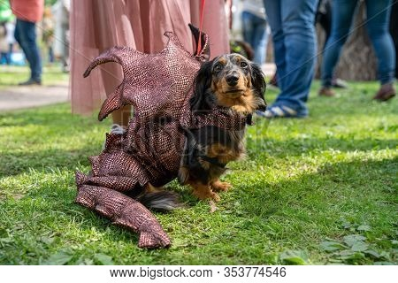 Portrait Dog Of The Dachshund Breed In A Red Dragon Costume In The Park At A Parade Festival Dachshu