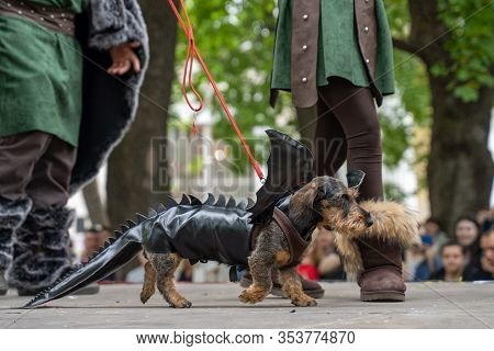 Portrait Dog Of The Wire-haired Dachshund Breed In Costume A Black Dragon In The Park At A Parade Fe