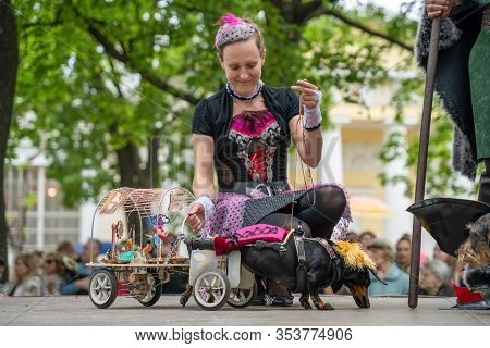 Russia, St. Petersburg, May 25, 2019: Portrait Dog Of The Dachshund Is Disabled Breed In Costume As