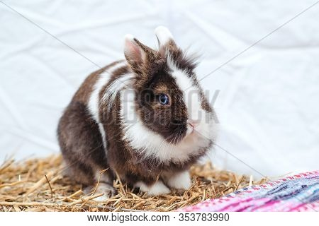 Small Fluffy Bunny On Hay. Easter Bunny. Home Decorative Rabbit Outdoors. Cute Little Bunny. Easter