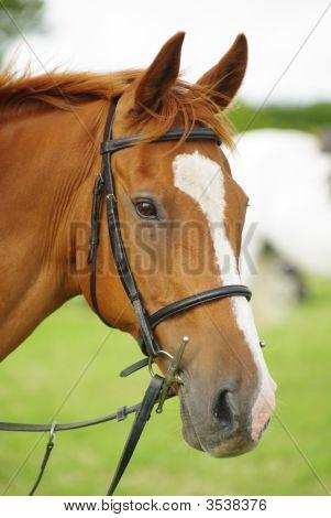 Horse Head 4