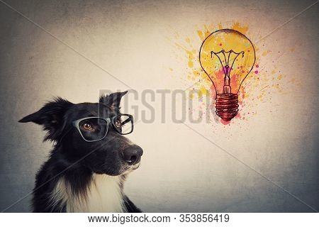 Pensive Wise Border Collie Dog Wearing Glasses Looks Up, Thinking Of Ideas As A Colorful Light Bulb