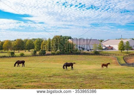Horses At The Horse Farm. Country Landscape.