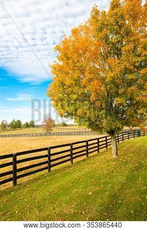 Beautiful Autumn Country Landscape With Colorful Tree And Pastures Of Horse Farm.