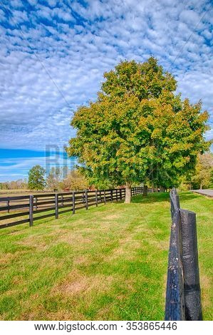 Beautiful Country Landscape With Colorful Tree And Pastures Of Horse Farm.