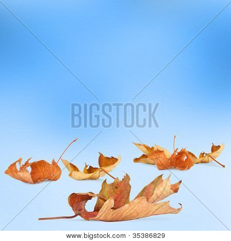 Bright autumn leaves on the abstract background with bokeh poster