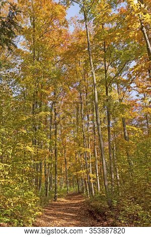 Forest Path In The Peak Of Fall At The Louis M Groen Nature Preserve In Johannesburg, Michigan