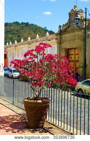 February 25, 2020 In Antigua, Guatemala:  Potted Flower On An Outdoor Patio Overlooking An Authentic