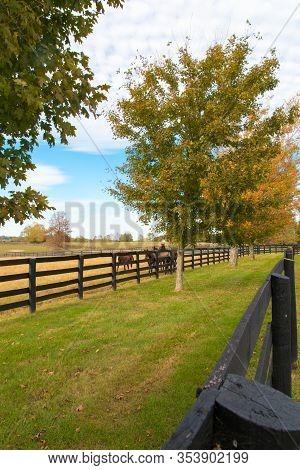 Horses At Horsefarm. Autumn Country Landscape. Kentucky, Usa.
